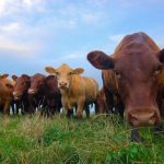 15 Best Grass-Fed Whey Protein Powders 2021